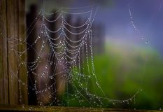 Spiderweb met dauw Stock Foto
