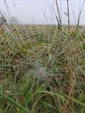 Spiderweb met ochtenddauw stock foto