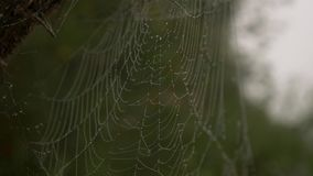 Spiderweb mit Tau stock video footage