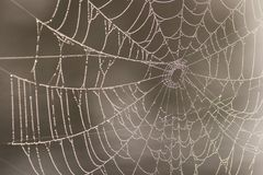 Spiderweb mit Wassertröpfchen Stockfotos