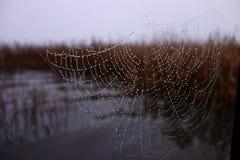 Spiderweb mojado formado ángel Imagenes de archivo
