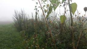 Spiderweb molhado Fotografia de Stock Royalty Free