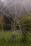 Spiderweb in the morning Royalty Free Stock Photos