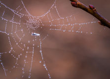Spiderweb in morning dew Royalty Free Stock Photography