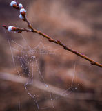 Spiderweb in morning dew Royalty Free Stock Photos
