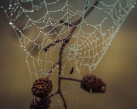 Spiderweb in morning dew Stock Photo