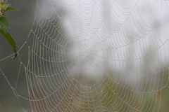 Spiderweb in the morning forest. Spider web in the morning forest with waterdrop royalty free stock image