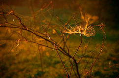 Spiderweb in morning Stock Images
