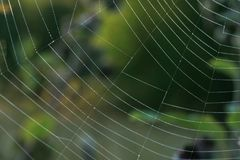 Spiderweb in morning sunlight with droplet. Royalty Free Stock Photography