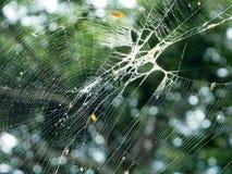 Spiderweb-Nahaufnahme unter grünem Baum-Hintergrund Lizenzfreies Stockbild