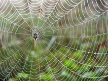 Spiderweb nel prato Fotografia Stock