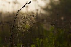 Spiderweb op de zwarte installatie stock foto's