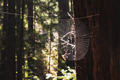 Spiderweb op zonlicht en geblazen uit achtergrond stock foto's