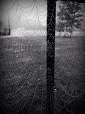 Spiderweb in the rain Stock Photos