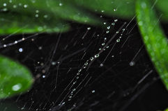 Spiderweb with after rain water droplets Stock Images