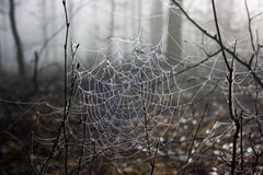 Spiderweb. Raindrops in a big  Spiderweb Royalty Free Stock Photo