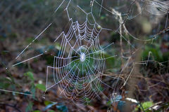 Spiderweb. Raindrops in a big  Spiderweb Royalty Free Stock Photos