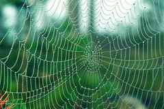 Spiderweb in raindrops stock image