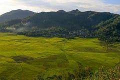Spiderweb Rice Fields Stock Photos