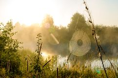 The spiderweb on the river at dawn. The spiderweb on the river at sunrise in the grass opposite the sun Stock Images