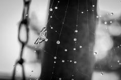 Spiderweb rov arkivfoton