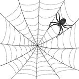 A Spiderweb with Spider. On white background. Vector Illustration Stock Image