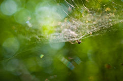 Spiderweb. Royalty Free Stock Photos