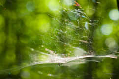 Spiderweb. Stock Images