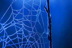 Spiderweb. Spiders Work in the morning hours Royalty Free Stock Images