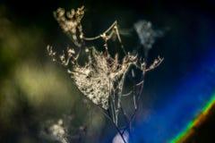 Spiderweb on sun back-lit Royalty Free Stock Photo