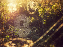 Spiderweb in sun Royalty Free Stock Photography