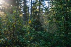 Spiderweb in sunlight closeup. Spiderweb in sunlight. Eastern Sayan, Krasnoyarsk region, Siberia, Russia. Horizontal closeup shot Royalty Free Stock Image