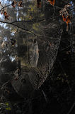 Spiderweb. Sunlight passes through the web Stock Photography