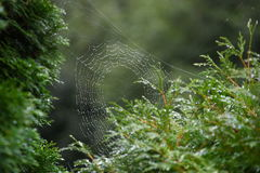 Spiderweb. Sunlight shining through water drops on a spiderweb Royalty Free Stock Photo
