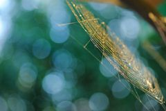 Spiderweb. Sunlit spiderweb on a bokeh background of leaves stock photos