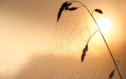 Spiderweb at sunrise close up Royalty Free Stock Photo