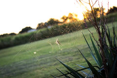 Spiderweb at sunset Stock Photos