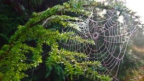 Spiderweb täckte i frost Arkivbild
