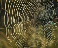 Spiderweb tło Fotografia Stock