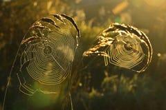 Spiderweb tło Obraz Royalty Free