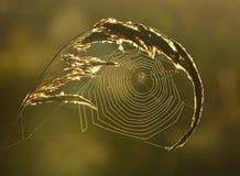 Spiderweb tło Zdjęcia Stock