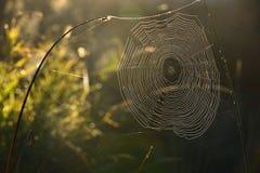 Spiderweb tło Obrazy Royalty Free
