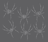 Spiderweb theme Stock Images