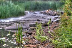 Spiderweb on the thorn against the background of a small river with stones along the banks and grass around. royalty free stock photography