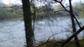 Spiderweb on a tree branches. In autumn fog stock footage