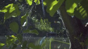 Spiderweb on tree branches stock video
