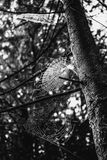 Spiderweb on a tree Stock Images
