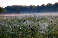 Spiderweb in un campo Fotografia Stock