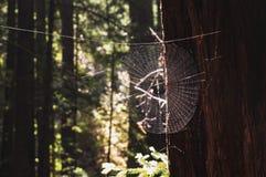 Spiderweb w świetle słonecznym i wystrzelonym tle out zdjęcia stock