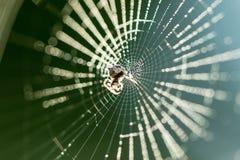Spiderweb w robić Obraz Royalty Free